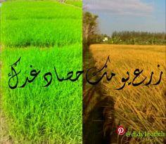 زرع يومك حصاد غدك