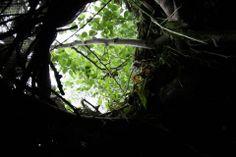 BACKyART, window on nature (in collaboration w/ Ignace Parmentier)