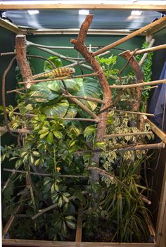 "Make a ""tree"" by attaching vines and ""branches"" to the ""trunk"". Also, you can attach ropes, potted plants, and more for your chameleon to climb on."