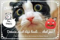 Ohhh non...! Pas... CHAT!!! Demain, c'est déjà lundi... chat pue !