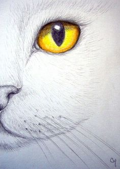 """White Cat - Topaz Eye"" par Cyra R. Cancel"