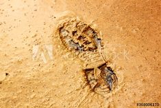Shoeprint In Sand – kaufen Sie dieses Foto und finden Sie ähnliche Bilder auf Adobe Stock | Adobe Stock Photography, Animals, Image, Pictures, Photograph, Animales, Animaux, Fotografie, Photoshoot