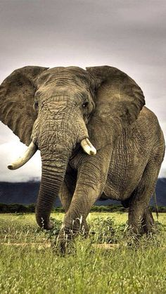 Gentle giant... Lovely creature