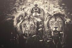 """La série """"African Souls"""" de la photographe allemandeManuela Kulpa, qui capture les animaux africains avec un regard et un traitement très particulier. Des p"""