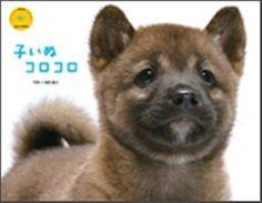 2012 puppy kolo kolo calendar