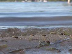 Freshwater jellyfish discovered in Michigan lake