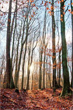 Pirmin Nohr - Sonnenschein im Herbstwald baum herbst Herbstlaub himmel Landschaft Licht natur sonne wald wolken Winter Wälder
