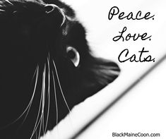 Cat memes, videos and tips for your furry buddy. Photography, streaming memes and gifs wrapped up with fun and educational videos based on cat life. Maine Coon Cats, Photo Quotes, Cat Memes, Funny Cute, Photo S, Black Cats, Pictures, Fictional Characters, Beautiful