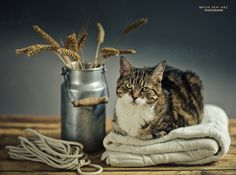 photo: Натюрморт с котом | photographer: Nailia Schwarz | WWW.PHOTODOM.COM