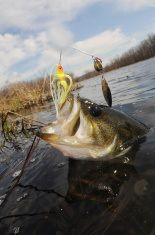 Smallmouth Bass Fishing Excursions - http://bassfishingmaniacs.com/smallmouth-bass-fishing-excursions/