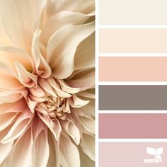 today's inspiration image for { flora tones } is by the talented @c_colli ... thank you Cristina for another inspiring #SeedsColor image share!
