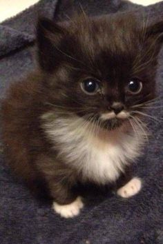 This little kitten has a cute white mustache!