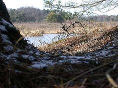 Heide in Twickel bij Beckum, gemeente Hengelo