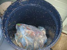Heb jij last van stank & maden in je vuilnisbak / container? Met deze…