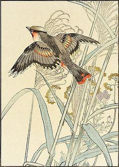 Japanese Silver Grass, Gentian, Eastern Waxwing by Imao Keinen