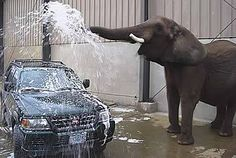 Elephant carwash! Get your service work done here at Becker Buick GMC in Spokane, and we will wash your car!  Make an appointment online.  Click picture.