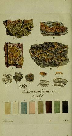 Svenska lafvarnas färghistoria  Stockholm :Tryckt hos C. Delén,1805-[1809]