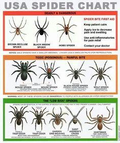 Bugs Survival Life, Camping Survival, Survival Skills, Emergency Preparedness, Survival Hacks, Outdoor Survival, Survival Stuff, Wilderness Survival, Survival Gear