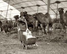 """Washington, D.C. """"Alice Longworth & Paulina at circus. May 11, 1926."""""""