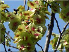 Ormeau champêtre de Camargue...  http://mistoulinetmistouline.eklablog.com/