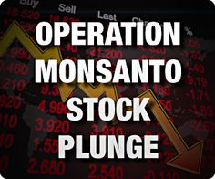 Organic Spies launches Operation Monsanto Stock Plunge: See the video, sell the stock. Just called my financial person and said check and see if any Monsanto stocks are hidden. If so SELL!!!