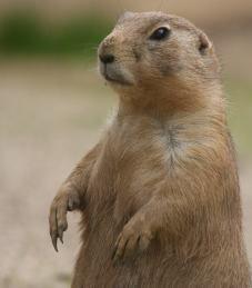 Tierpark Gettorf Brown Bear, Park, Animals, Pet Dogs, Animais, Animales, Animaux, Parks, Animal