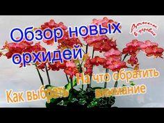 Обзор новых орхидей.  На что нужно обратить внимание при покупке.  03.03.17 - YouTube