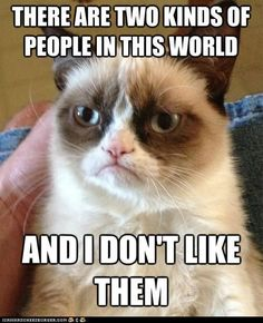 Grumpy Cat does not like them