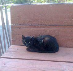 o pisica din Targu-Jiu
