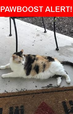 Is this your lost pet? Found in Kansas City, MO 64154. Please spread the word so we can find the owner!  Declawed Calico that might be pregnant.  Near North Ambassador Drive, KCMO, MO