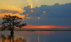 What to see & do at Everglades National Park... find campgrounds, RV parks & great activities in the area!