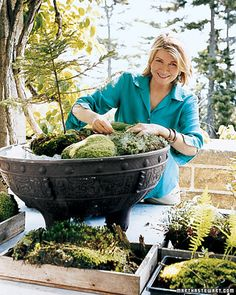 moss planted bowls