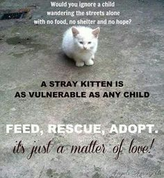 Feed, rescue, adopt