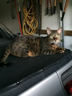Milo...on Daddy's car tarp...