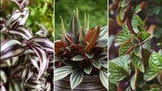 14 dolog, amit nem tudtál a dézsás citrusfélékről   Hobbikert Magazin Plants, Plant, Planets
