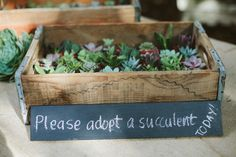 """""""Adopt a Succulent"""" favors Audrey and David's Wedding by Laura Lzumikawa"""