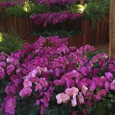 Amo orquídeas!  #olioliteam #flowers #latabledegiselle