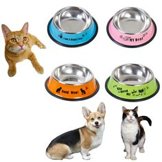 Stainless Steel Feeding Bowl //Price: $16.96 & FREE Shipping //     #animals #petworld #ilovemycat #catoftheday