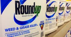 Amid growing international concern over the health risks posed by Monsanto weedkiller glyphosate, the U.S. Food and Drug Administration (FDA) will reportedly begin testing for the herbicide this year.