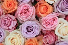 Roses are always beautiful, but these soft pastel colors have a vibe of their own...