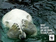 """""""33 Powerful Animal Ad Campaigns That Tell the Uncomfortable Truth"""" (blog post) (via Bored Panda) (June 2014) Highlights several ad campaigns using powerful images that address the plight of animals on our planet."""
