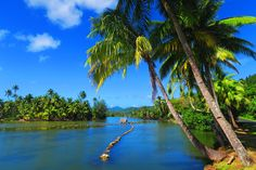 Explore the top tropical islands in the South Pacific. We'll visit the best islands in this remote region, where tropical dreams come true. Paradise Images, Ancient Fish, Paradise Found, French Polynesia, End Of The World, South Pacific, Tahiti, Remote, Tropical