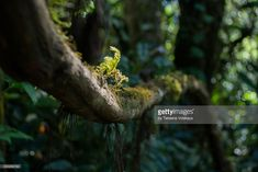 Stock Photo : Tropical rain forest of Thailand. Macro photo branch with moss and roots, blurred focus