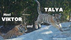 The Toledo Zoo!