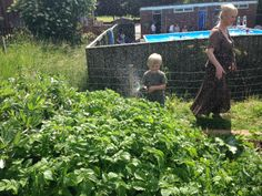 Much watering is needed on those potatoes!