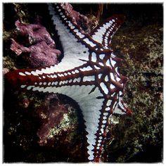 Starfish - Acuario de Gijón