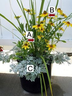 lots of container garden ideas - and it tells you what flowers/plants are in the arrangements