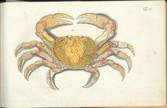 Versuch einer Naturgeschichte der Krabben und Krebse
