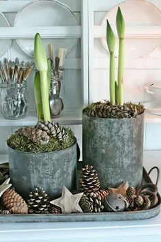 Amaryllis shoots, moss-filled cans and pine cones ~ rustic farm holiday . Amaryllis shoots, moss-filled cans and pine cones ~ rustic farm holiday – Christmas Flowers, Natural Christmas, Noel Christmas, Country Christmas, All Things Christmas, Winter Christmas, Christmas Crafts, Christmas Decorations, Xmas