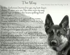 The Effective Pictures We Offer You About Blind dog hacks A quality picture can tell you many things. You can find the most beautiful pictures that can be presented to you about Blind dog tips in this Dog Poems, Dog Quotes, Animal Quotes, Pet Loss Quotes, Poems About Dogs, A Dogs Purpose Quotes, Animal Signs, I Love Dogs, Puppy Love
